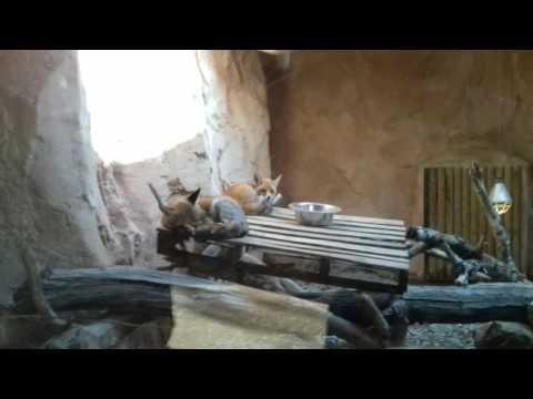 Des photos  pour  le zoo du  Rabat au Maroc