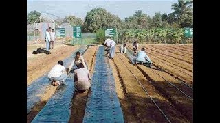 Mulching  Technique - New indian agriculture technology way in india