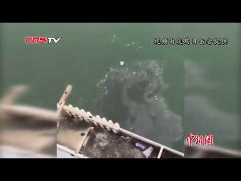 重慶公車墜江 乘客與司機互毆肇事