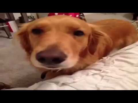 Top Cat VS Dog Funny Moment Vine Compilation #1