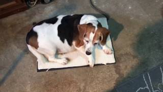 Keep Your Dog Warm In The Garage or Outdoors With a Heated Pet Pad