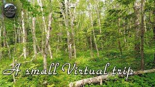 Прогулка по лесу и расслабляющая музыка для медитации, снятия стресса