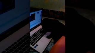 Прикол а КОТЕНОК ЗА КОМПЬЮТОРОМ смотрите сами шотландская вислоухая кошка