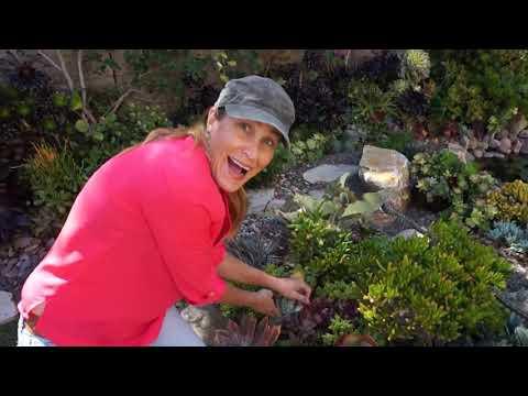 Lauras Tip of the Day (Garden Island)