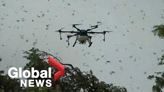India deploys drones to battle outbreak of desert locusts