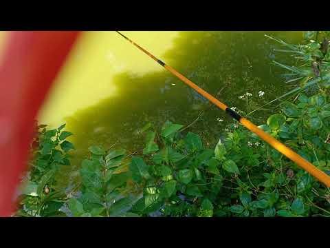 buổi sáng đi câu cá mùa thu p7
