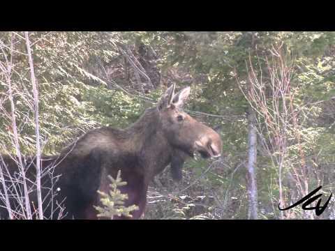 Beautiful British Columbia   'part 3' -   Nature and wildlife  -  YouTube