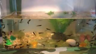 How to care for tadpoles