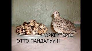 """1000 ДАРТКА ДАБА. АЙРЫКЧА """"ЭРКЕКТЕРГЕ"""" КОРУНУЗДОР!!!"""