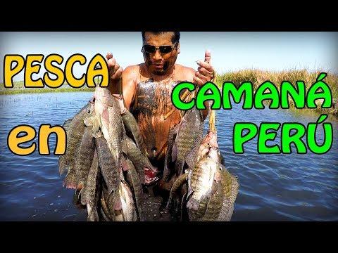 Pesca De TILAPIAS En CAMANÁ - PERÚ
