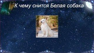 К чему снится Белая собака (Сонник)