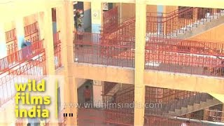 Corridors of The Shri Ram School, Vasant Vihar