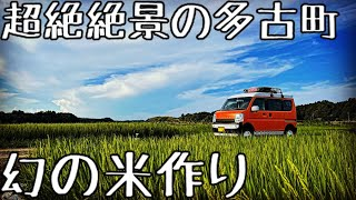 【二拠点生活】田舎古民家で暮らす独身が米作りをお手伝い♪幻の多古米が凄い!