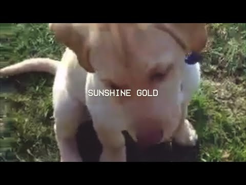 Sam The Astronaut - Sunshine Gold (Lyric Video)