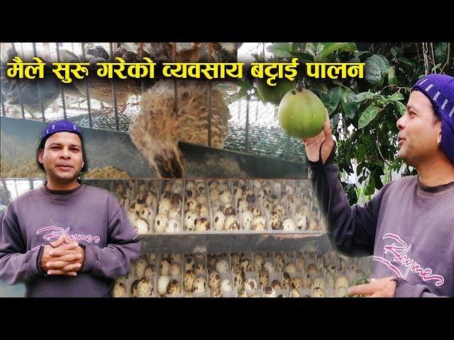 यसरी गरिन्छ बट्टाई चरा पालन हेर्नुस बान्द्रे को नयाँ ब्यबसाय  II Bandre Narayan Video Episode-2