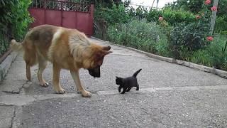 Приключения котенка Тишка  часть 4