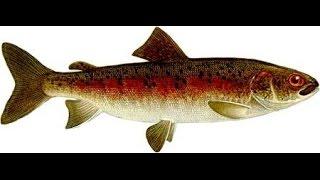 Русская рыбалка 3 99 Один из лучших способов прокачки опыта