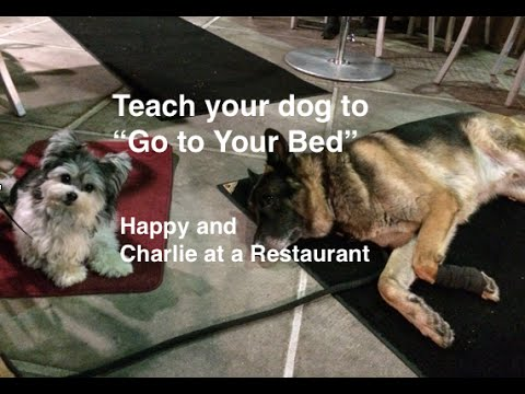 How to teach your Dog 'Go to Your Bed' 'place' command