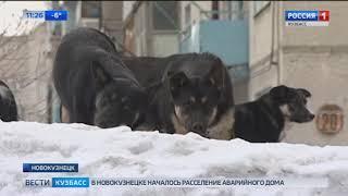 В Новокузнецке стая собак едва не растерзала мальчика