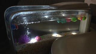 Backseat Fish Tank? A Touch of Bizarre in Detroit