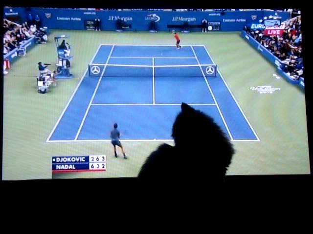 Djokovic vs Nadal vs Mal?r cica Us Open Final 2013