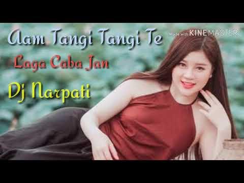 New Ho Munda Dj Songs || Aam Tangi Tangi Te Laga Caba Jan || DJ Narpati || Toklo |||