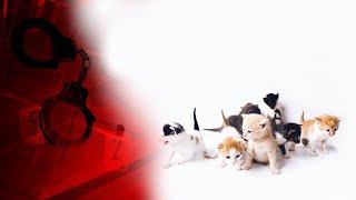 Коти від нудьги затопили київську багатоповерхівку