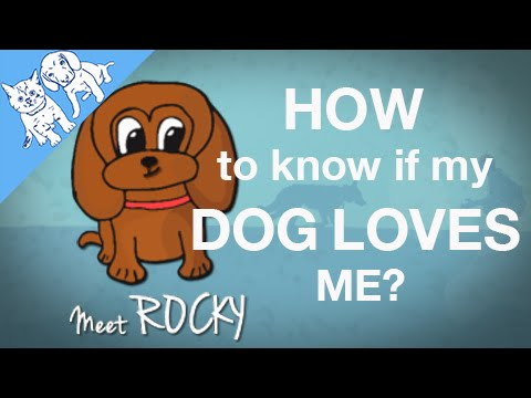 Six ways to know your DOG LOVES you!