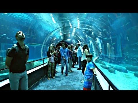 Рио: крупнейший аквариум Латинской Америки готов к открытию (новости)
