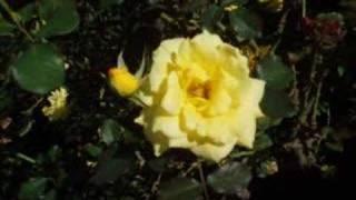 MIDIシーケンサーで作った広末涼子の2ndアルバム「private」の中の1曲で...