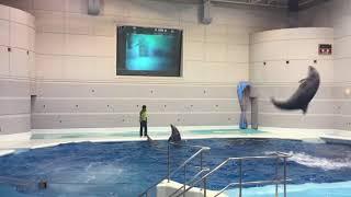 가고시마 아쿠아리움(Kagoshima Aquarium)…