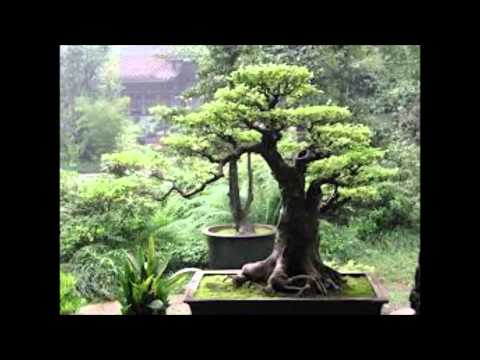 Ekologija Svesti - Feng Shui
