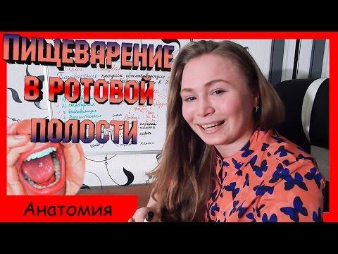 Сайт преподавателя биологии и химии Дмитрия