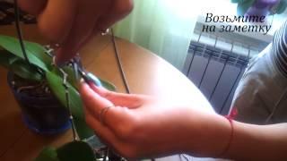 Обрезаем цветонос орхидеи, чтобы пустила новый(, 2015-08-20T09:18:00.000Z)