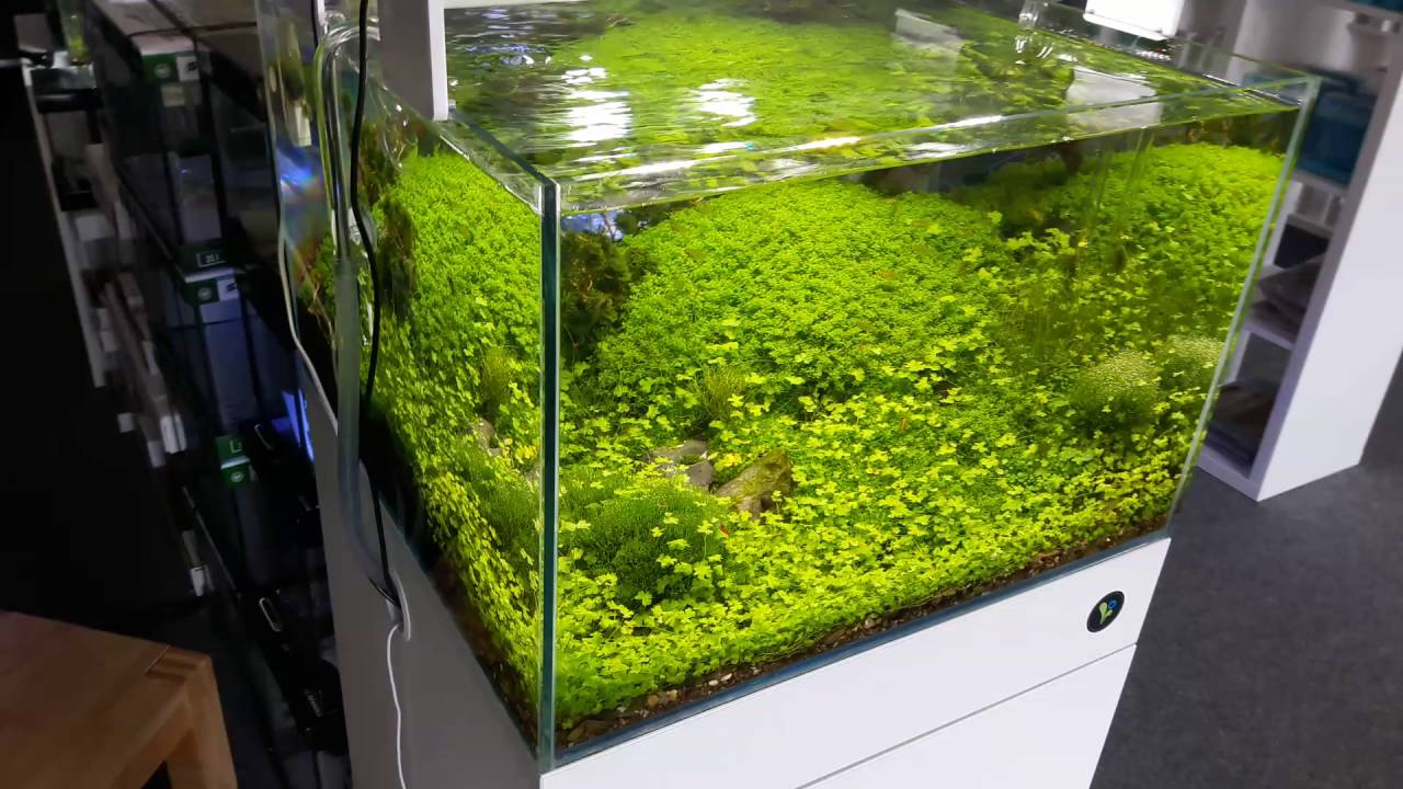 Bodendecker Aquarium Youtube