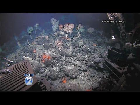 President Obama expands Papahanaumokuakea Marine National Monument