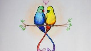Уроки рисования. Рисуем влюбленных птиц. День святого Валентина(Как нарисовать цветными карандашами птиц. Идея ко Дню Влюбленных ▻ Скачайте видео урок
