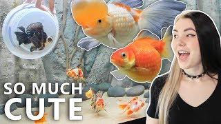 Goldfish Moving Day