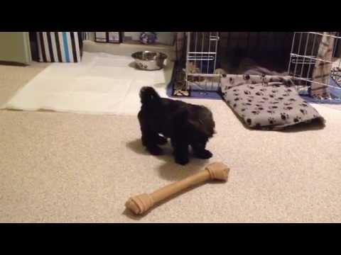 Big Dog Bone for Little Puppy
