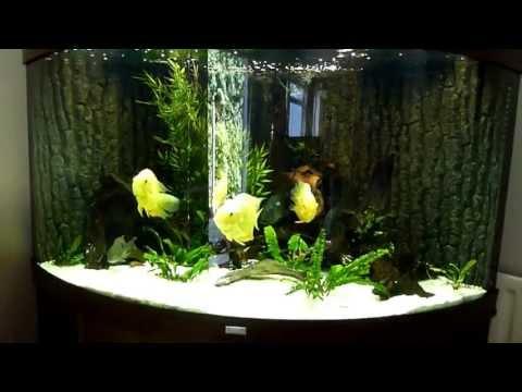 Juwel Trigon 350 South American Cichlid Fish Tank Aquarium