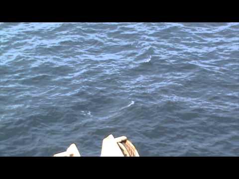 Whales offshore gabon