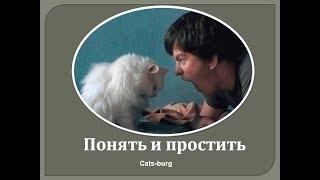Кошки. Преступление и Наказание. Кошачья логика