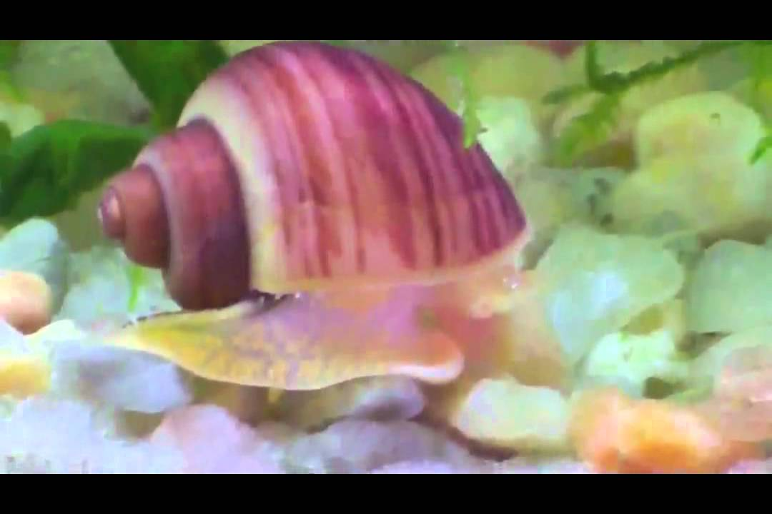 Image Result For Caracol