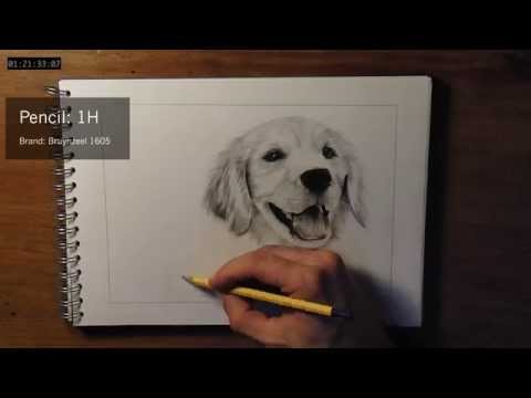 How to draw dog fur – Hyperrealistic / Photorealistic pencil drawing