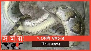 সবজি ক্ষেত থেকে ৮ ফুট লম্বা অজগর উদ্ধার | Python | Bagerhat News | Somoy TV