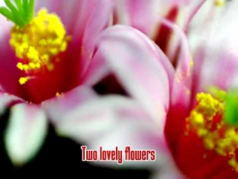 Two Lovely Flowers Eddie Peregrina Youtube