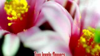 Two Lovely Flowers - Eddie Peregrina