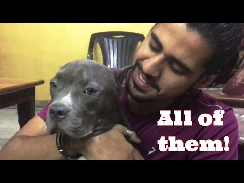 ALL OF MY PETS(20+) in One Video | Wildly Indian