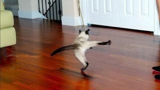 Удачные и неудачные прыжки котов   взлеты и падения