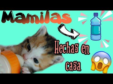 Como hacer Mamilas caseras para perritos 🐶 o gatitos 🐱 bebes👍👍